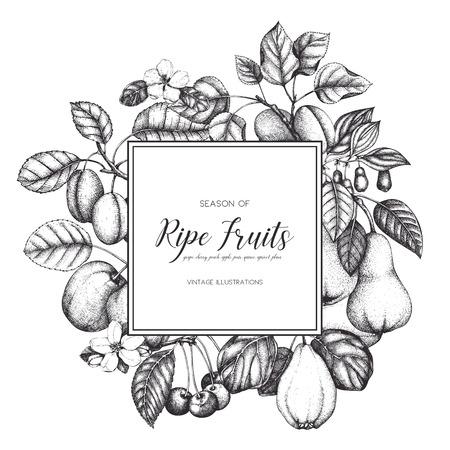 Conception de cartes de fruits vintage. Banque d'images - 86936390