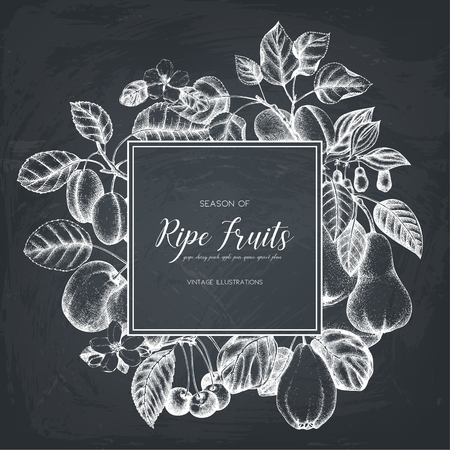 Conception de cartes de fruits Vintage sur tableau noir Banque d'images - 86936391