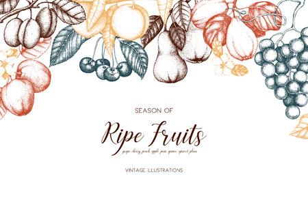 Conception de cartes de fruits vintage. Banque d'images - 86936393