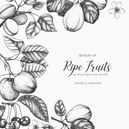 Conception de cartes de fruits vintage. Banque d'images - 86936398