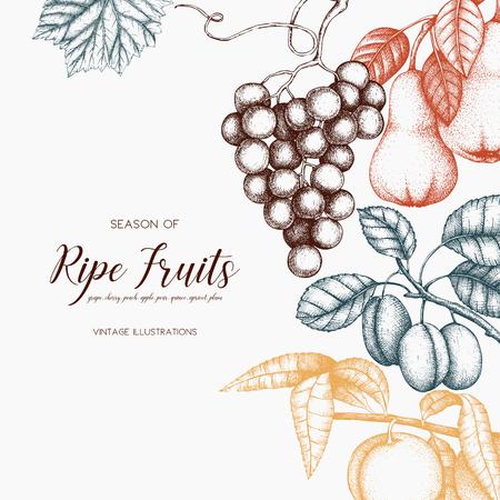 Conception de cartes de fruits vintage. Banque d'images - 86936399