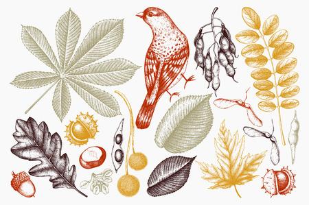 Collection d'automne avec oiseau Vecteurs