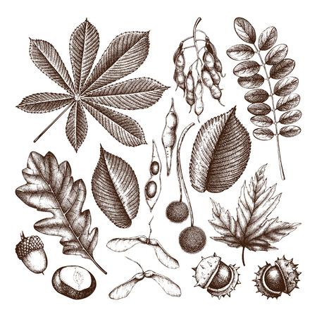 Colección de ilustraciones otoñales