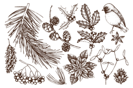 Vector collection of hand drawn christmas decor elements with bird. Vintage winter plants sketch set. Conifers, berries, flowers, cones, seeds illustration. Outlines. Vettoriali
