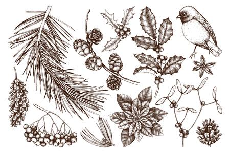 Vector Sammlung Hand gezeichnete Weihnachtsdekorelemente mit Vogel. Vintage Winterpflanzen-Skizzensatz. Koniferen, Beeren, Blumen, Kegel, Samenillustration. Umrisse.