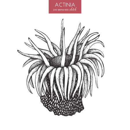 A Hand drawn actinia sketch