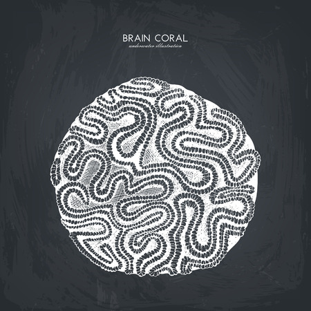 Hand drawn brain corall sketch Illustration