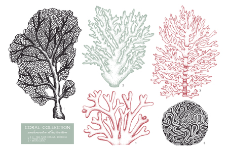 Reef corals collection on plain background.