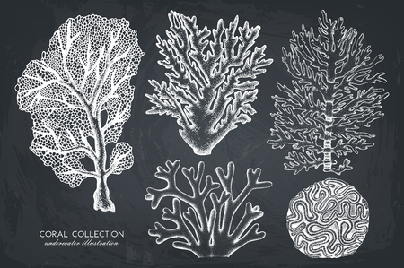 Reef corals collection on chalkboard on plain background.