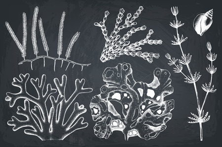 A green seaweed illustrations on plain background.