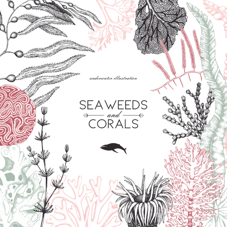 A Vector frame with hand drawn sea corals, fish, stars sketch. Vintage background with underwater natural elements. Decorative sealife illustration isolated on white. Wedding design.