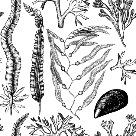 A Seamless pattern with hand drawn seaweeds, corals , shells sketch. Vector background with underwater natural elements. Vintage sealife illustration.