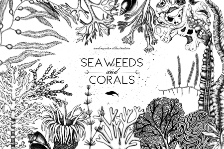 Vector frame with hand drawn sea corals, fish, stars sketch.