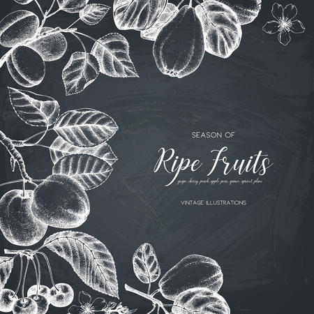Vintage fruits and berries card design.