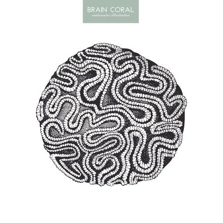 Croquis de corail cerveau dessiné à la main. Vecteurs
