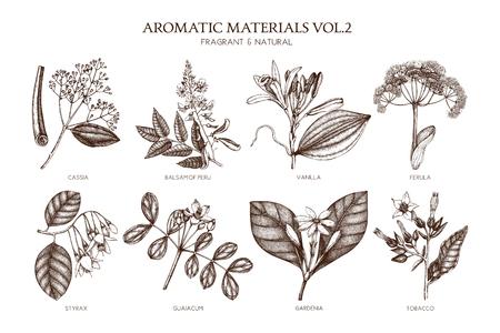 Collection de vecteur de plantes aromatiques dessinées à la main Vecteurs