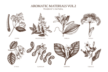 Collezione vettoriale di piante aromatiche disegnate a mano Vettoriali