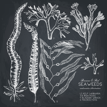 Vector collection of hand drawn brown and red seaweeds