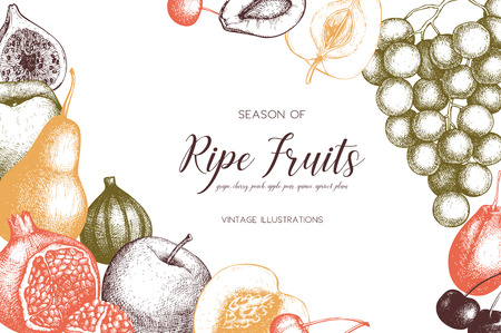 Vintage collection of fruits Иллюстрация