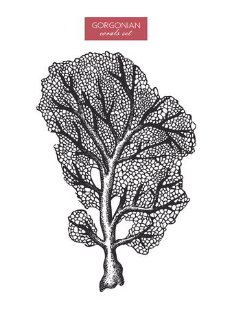 Hand drawn gorgonian reef coral sketch. Banque d'images - 122890175