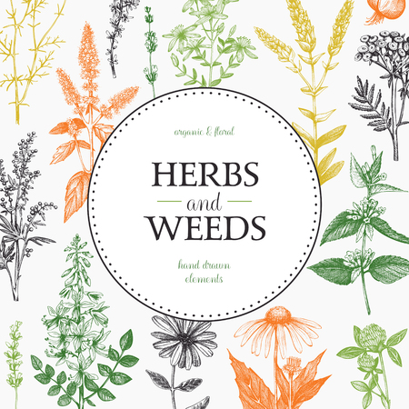Vector card design with hand drawn herbs and weeds Banque d'images - 122890177