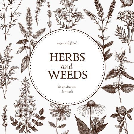 Conception de vecteur avec des plantes médicinales esquissées à la main.