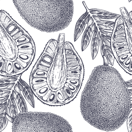 Breadfruit Tropical hand drawn