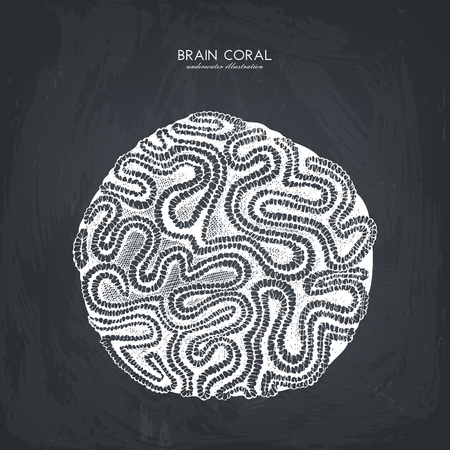 Vector sketch of hand drawn brain coral.