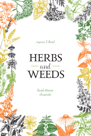 Vector card design with hand drawn herbs and weeds