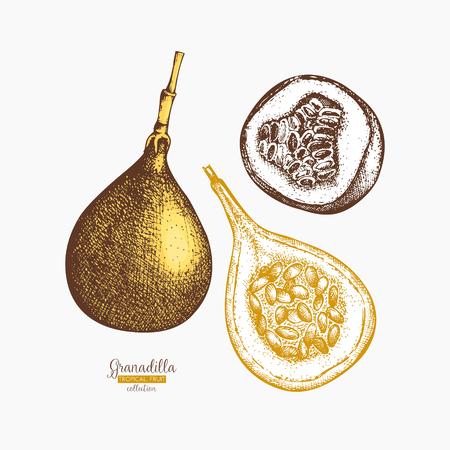 Sweet granadilla hand drawn