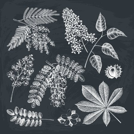 Vector collection of hand drawn blossoming trees illustration. Botanical garden drawing on chalkboard. Flower shop design
