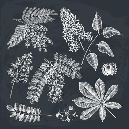 Vektorsammlung Hand gezeichnete blühende Baumillustration. Botanischer Garten, der auf Tafel zeichnet. Design des Blumenladens