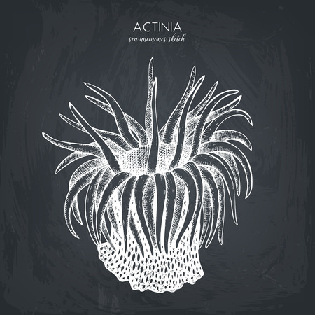 Hand drawn actinia - sea flower.