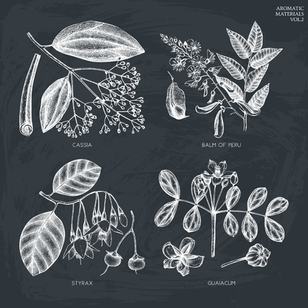 Vector collection of hand drawn plants on chalkboard.