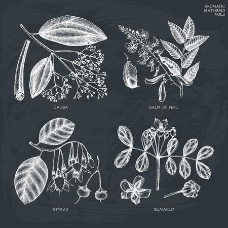 Vektorsammlung von Hand gezeichneten Pflanzen auf Tafel. Vektorgrafik