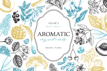 Vector floral background. Hand drawn perfumery and cosmetics ingredients illustration. Aromatic and medicinal plant design. Vintage template