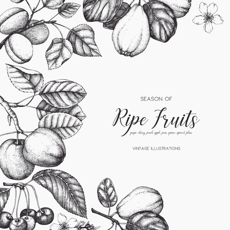 Vintage fruits and berries card design. Vector autumn template. Hand drawn harvest illustration.