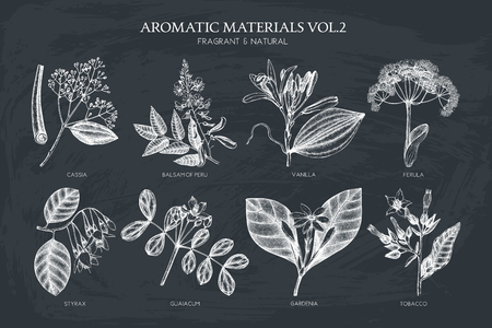 Vector collection of hand drawn Aromatic plants illustration. Perfumery and cosmetics ingredients