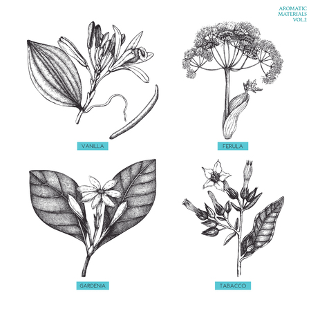 Vector collection of hand drawn Aromatic plants illustration. Perfumery and cosmetics ingredients sketch set.