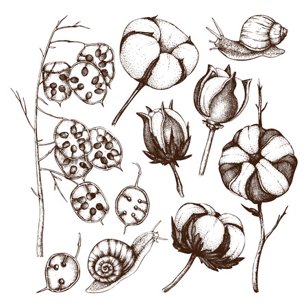 Vector collection of hand drawn cotton and honesty branches with snails. Vector Illustration