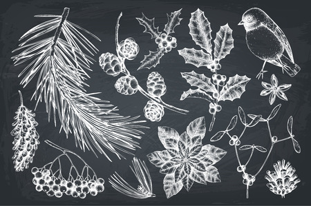 Vector collection of hand drawn christmas decor elements with bird. Vintage winter plants sketch set. Conifers, berries, flowers, cones, seeds illustration. Outlines on chalkboard.