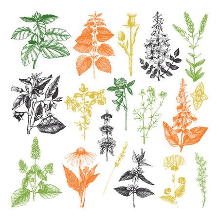 Colección de vectores de hierbas y malezas dibujadas a mano.