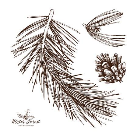 Illustrazione dell'albero di pino dell'annata. Schizzo di conifere disegnato a mano con cono su priorità bassa bianca. Pianta di conifere di vettore. Vettoriali