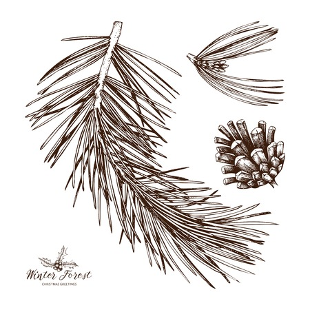 Vintage Pine Tree illustration. Hand drawn conifer sketch with cone on white background. Vector conifer plant. Vektorové ilustrace