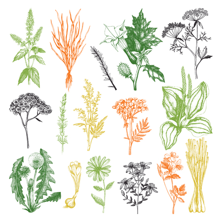 Vector Collection of Hand Drawn Spices and Herbs.