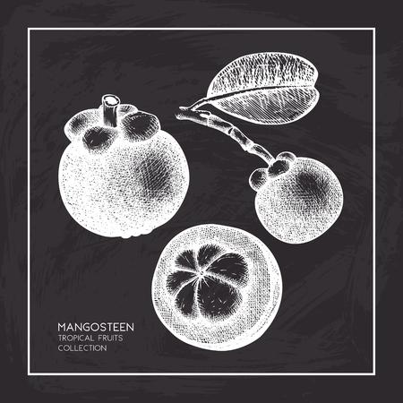 Purple mangosteen fruit hand drawn Stock Vector - 122886905