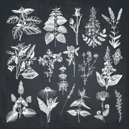 Accumulazione di vettore delle erbacce e delle erbe disegnate a mano. Vettoriali