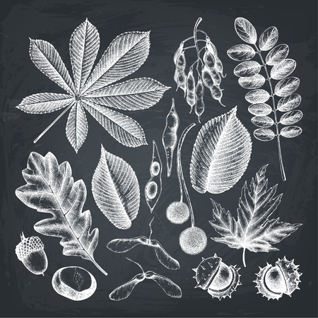 Vintage set of hand drawn leaves and seeds