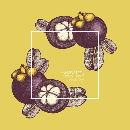 Purple mangosteen fruit hand drawn Illustration