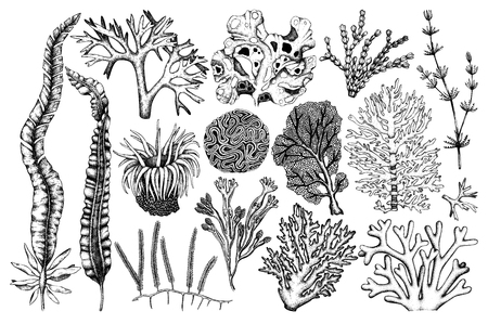 Vector collection of hand drawn sea weeds, corals, actinia